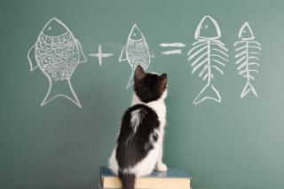 Katze Tafel